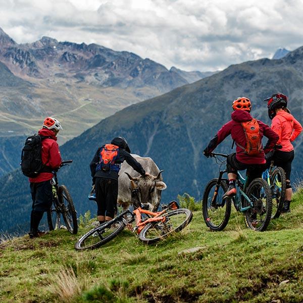 Biker und Kuh im Einklang - Bike Republic Sölden